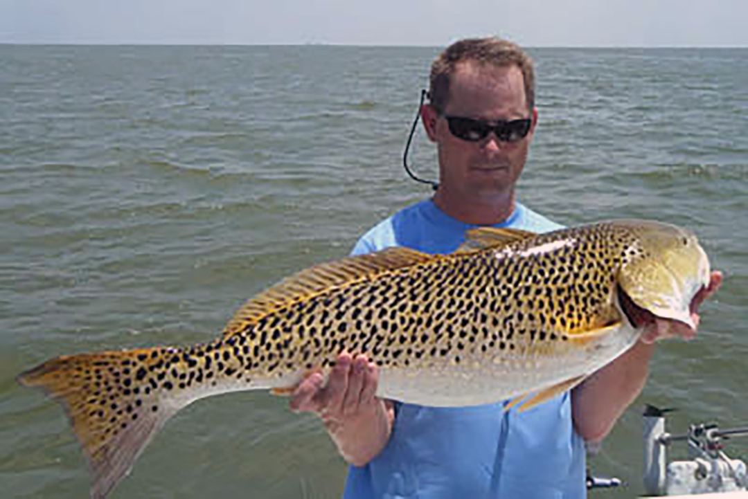 red drum with lots of spots