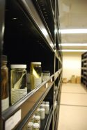 Fish Collection in Natural History Collections Building